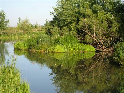 floating islands help pond habitat mississippi state