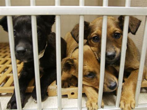 adoption nashville nashville animal rescue and adoption groups nashville lifestyles