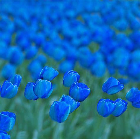 imagenes de flores turquesas azul beautiful blue cool fields image 453195 on