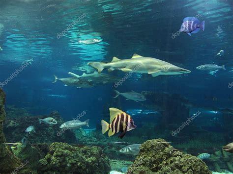 imagenes yoga en el mar tibur 243 n y peces en el fondo del mar foto de stock