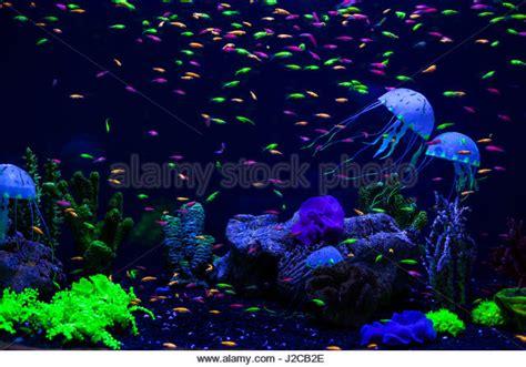 Jellyfish Floor L by Floor Stock Photos Floor Stock