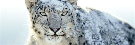 how to upgrade from snow leopard to lion snow leopard updates are probably done here are your os x