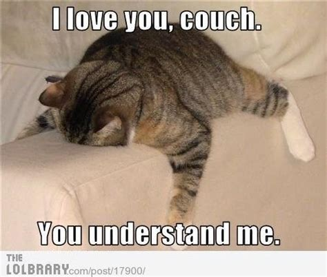 couch potato jokes couch potato lol cats pinterest