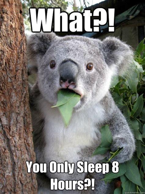 Angry Koala Meme - koala meme you scammed me image tagged in memes angry koala