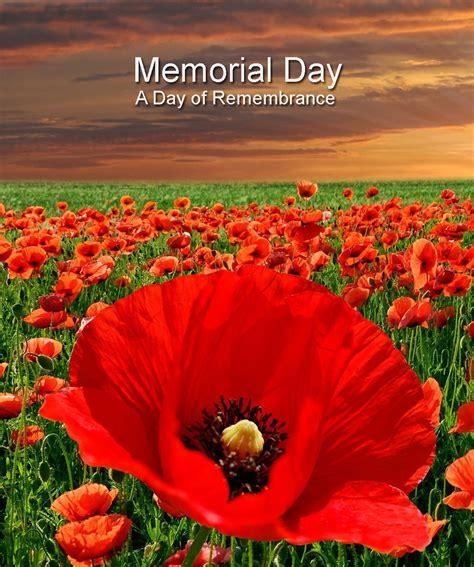 memorial day poppy poem newhairstylesformen2014 com