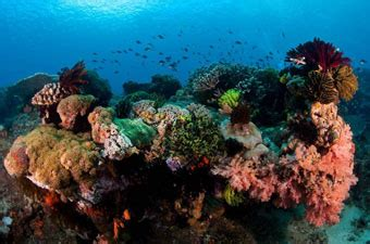 dive lombok diving gili island package diving lombok package