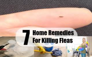 flea home remedies home remedy for tick removal on dogs breeds picture