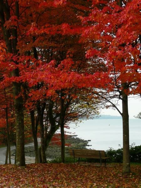 Fall Bargains by Travel Deals In Canada Best In Fall Travel