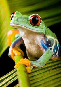 Rainforest Wall Stickers 1000 images about rainforest animals images on pinterest