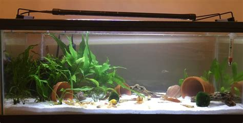 set   betta tank  pictures wikihow