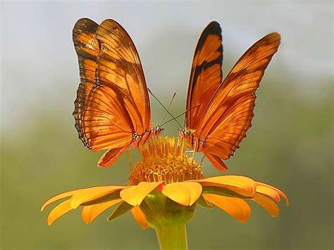 imagenes de dos mariposas juntas mariposas familia feliz joven