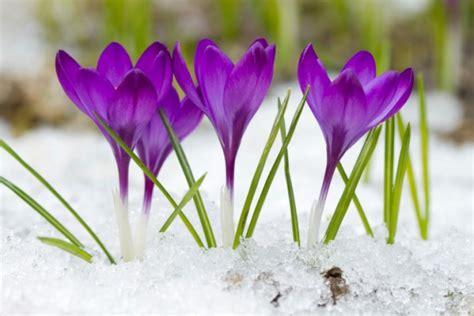 fiori di inverno 5 piante colorate per l inverno pollicegreen
