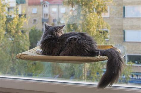 amaca per gatti la amaca per gatti che si attacca alla finestra
