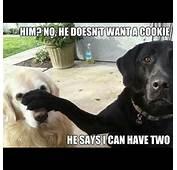 Funny Meth Lab Dog