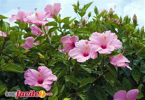 fiori da siepe il giardino dei sogni le migliori piante da siepe per il
