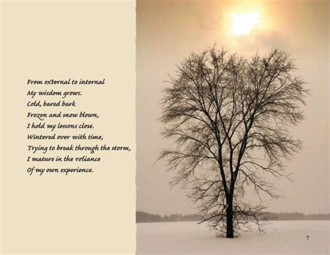 inspiration tree quotes quotesgram