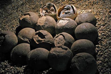 Found Find Matthew S Williams S Dinosaur Eggs Found With Embryos Still Inside April 13