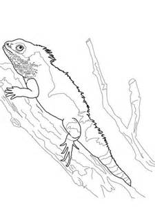 chinese water dragon coloring page super coloring