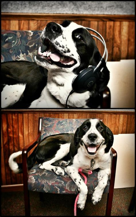 sheboygan humane society golden retrievers http y94 blogs pets 192 pet of the week matilda 2014 01 02t10 51 22z 2014 01