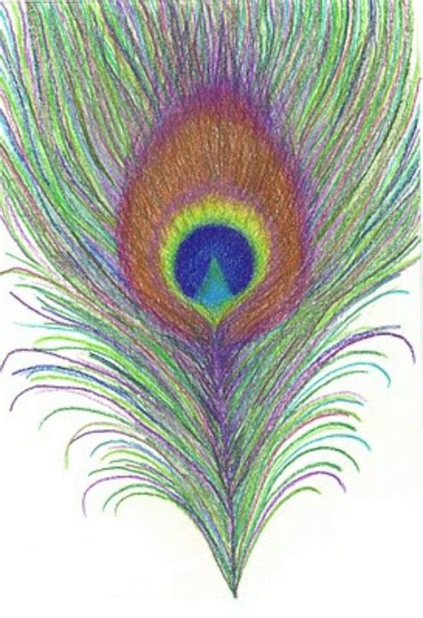 pretty peacock feather drawing creativefan i really like to draw pretty things