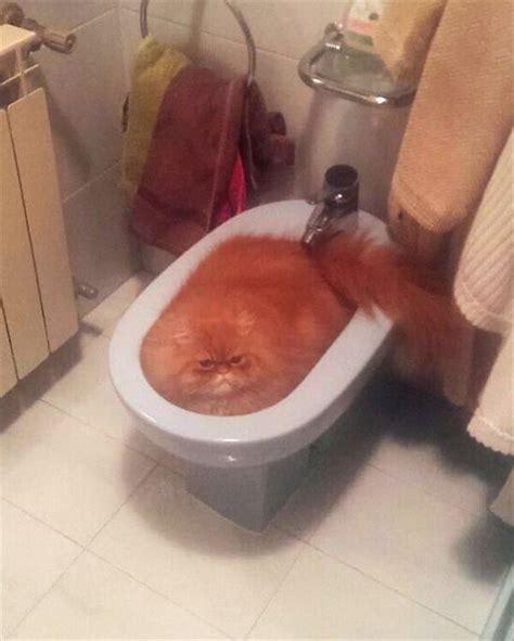 bidet ghostbusters やっぱり猫は液体だわ と思うような可愛くて面白いネコ画像 15枚
