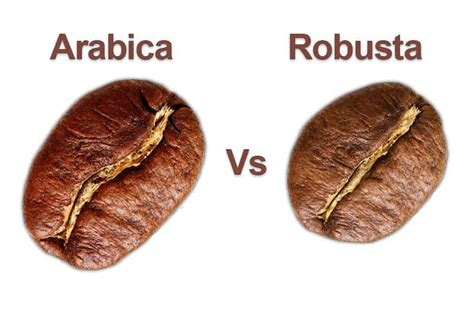 Coffee Robusta the aromas and the taste of coffee arabica vs robusta