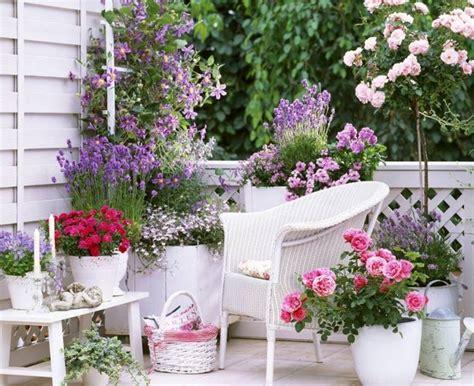 quando fiorisce la lavanda piante profumate in balcone piante appartamento quali