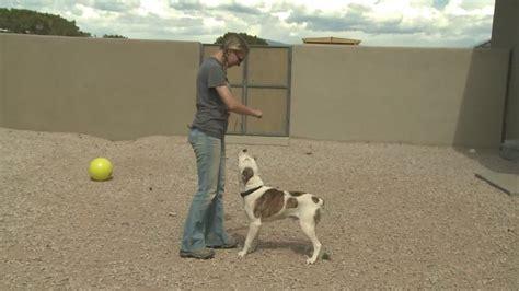 New Start Detox Santa by Santa Fe Animal Rehab Center Gives Shelter Dogs New Start