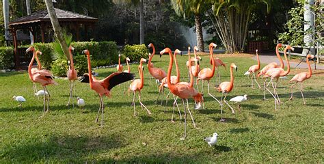 flamingo flock wallpaper flock of pink flamingo stock photo 0586 by annamae22 on