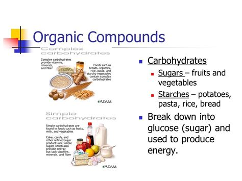 carbohydrates organic compound cell transport ppt