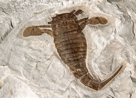 Fossil New written in seen through my lens the eurypterid