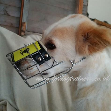 how often should puppies drink water best muzzle for dogs of medium and large breeds allows