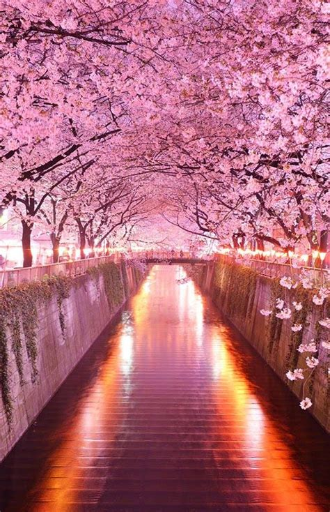 flower tunnel japan 17 best ideas about beautiful nature photography on