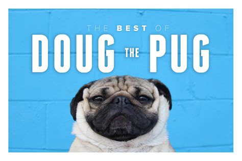 doug the pug the best of doug the pug it s awesome pawbuzz