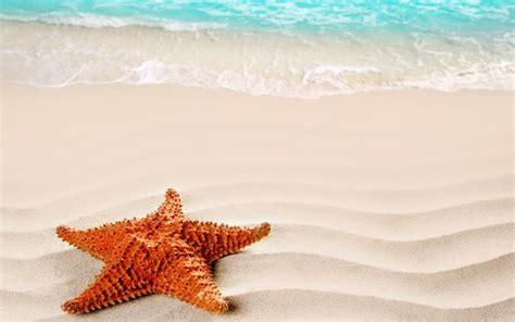 hd starfish wallpaper