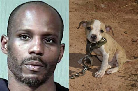 pitbull fight dmx arrested again in underground pit bull fighting bust pets nigeria