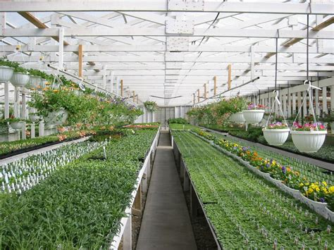 greenhouse layout greenhouse layout ideas decosee com