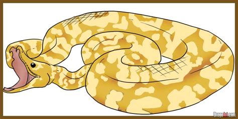 free ball python snakes coloring pages
