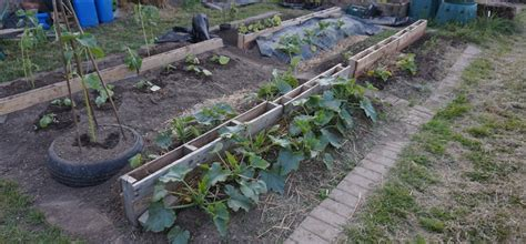 Garden Allotment Ideas Allotment Ideas Designs Upcycling Skipped Construction Materials To Make Growing Vegetables