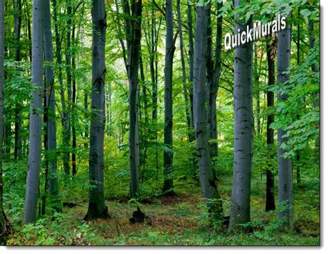peel and stick wall murals woodland forest peel and stick wall mural
