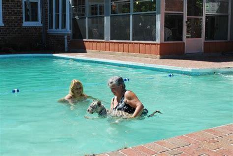 Bagno In Piscina In Florida Bagno In Piscina Con Il Tigrotto Allo Zoo Costa