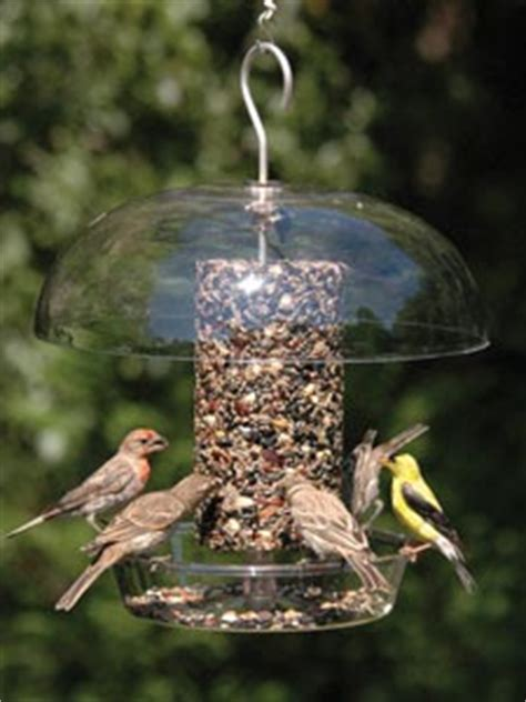 feeding wild birds what ejse besides seed birds unlimited what should be my next feeder