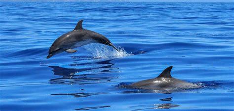 bagno con delfini il bagno con i delfini ne faremo a meno vivere vegan