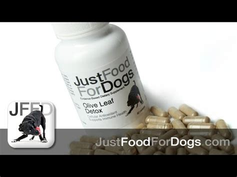 Olive Leaf Detox For Dogs supplements for dogs olive leaf detox justfoodfordogs