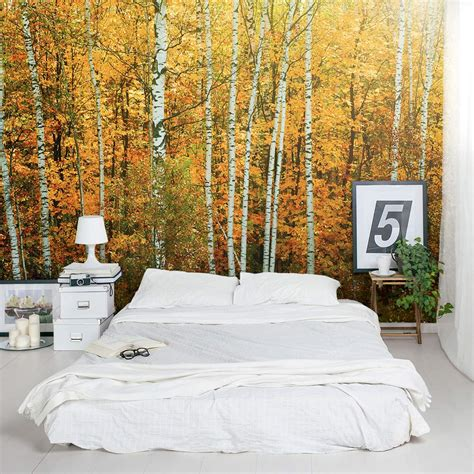 wall mural for autumn birch tree forest wall mural