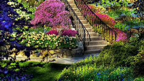 colorful garden hd wallpaper hd latest wallpapers