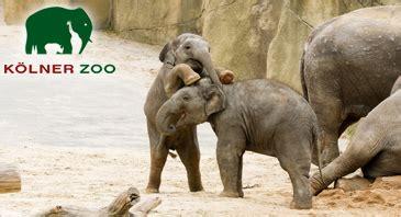 zoologischer garten rabatt jahreskarte voucher k 246 lner zoo 01 01 2018 tickets