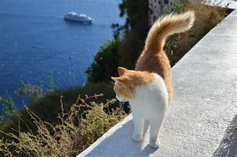 free photo cat greece the sea ship free image on