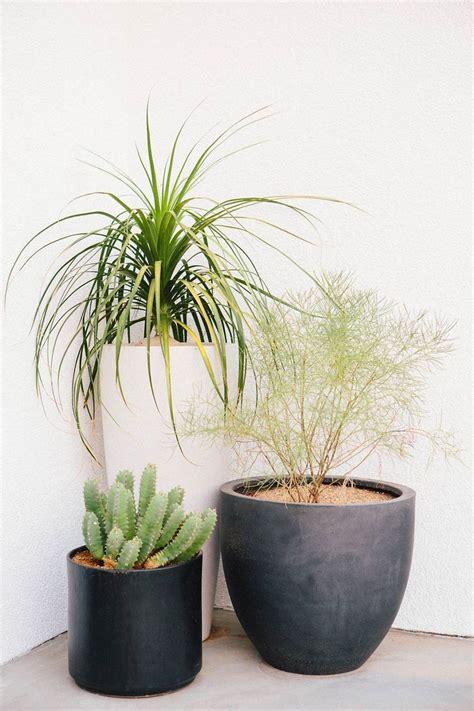 best plants for backyard privacy best privacy plants ideas on pinterest trellis backyard