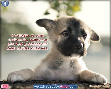imagenes tristes de amor con animales im 225 genes bonitas lindo perro con frases de tristeza